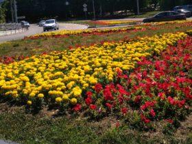 Цветник в районе железнодорожного моста (автовокзал)